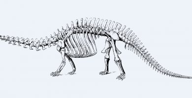 que estudia la paleontologia